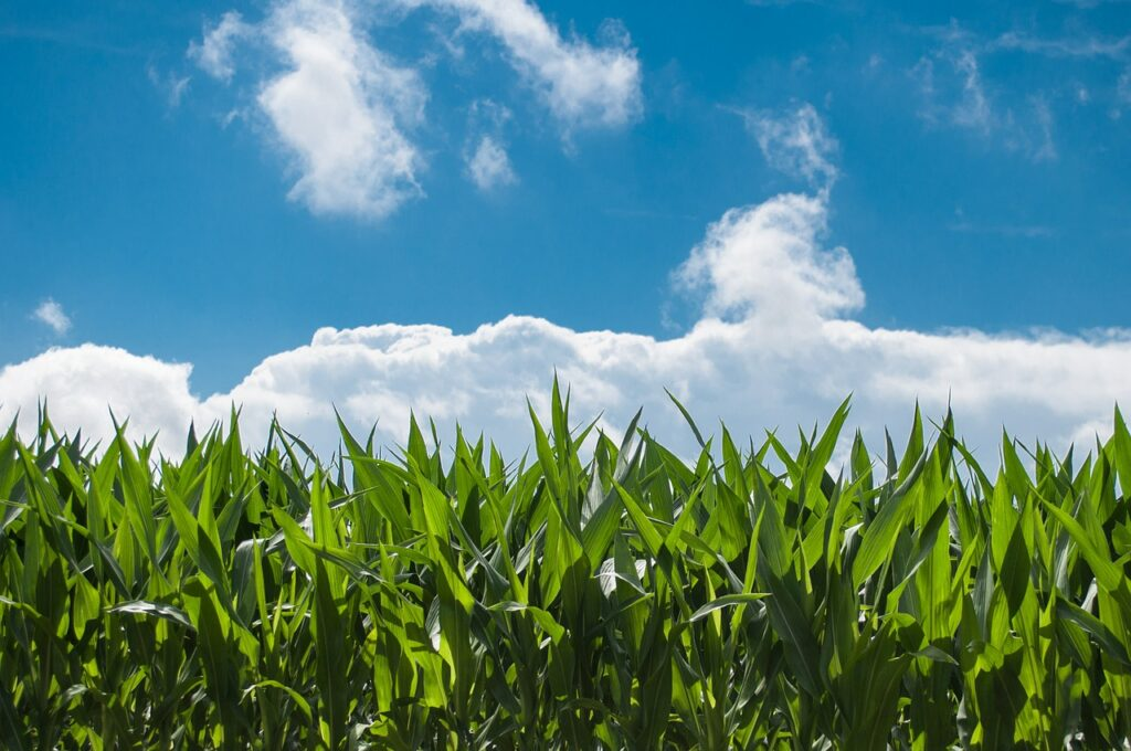 Plant root hairs help reduce soil erosion