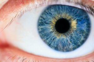 Researchers Find A New Signal Which Our Eye Sends To Brain