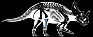 Researchers Find The First Confirmed Case of Aggressive Bone Cancer in a Dinosaur