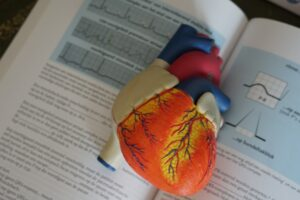 Scientists Create The First-Ever Functioning Mini Human Heart Model