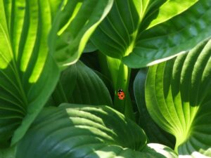 How Plants Safeguard Themselves Against Pathogens By Closing Their Pores