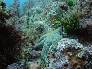 Evidence Shows That Marine Ecosystems Are Under Increasing Pressure