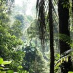 Countries Are Set to Miss all the Targets They Set Themselves To preserve Nature