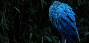 Why Blues and Greens are the Brightest Colors in Nature? New Study Explains