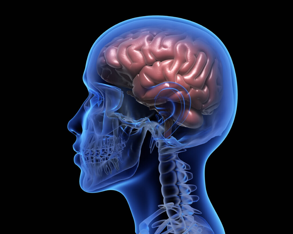 The Blood-Brain Barrier: Why Don't The Brain Get Infected Easily?