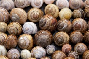 New Study Finds Highest Level Of Microplastics In Molluscs