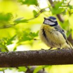 For The First Time, Scientists Saw Birds' Quantum Sense In Action