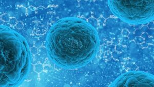 Study Finds How Individual Macrophages React To Different Stimuli