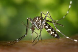 Study Shows That Multiple Blood Meals For Mosquitoes Can Increase Risk Of Malaria