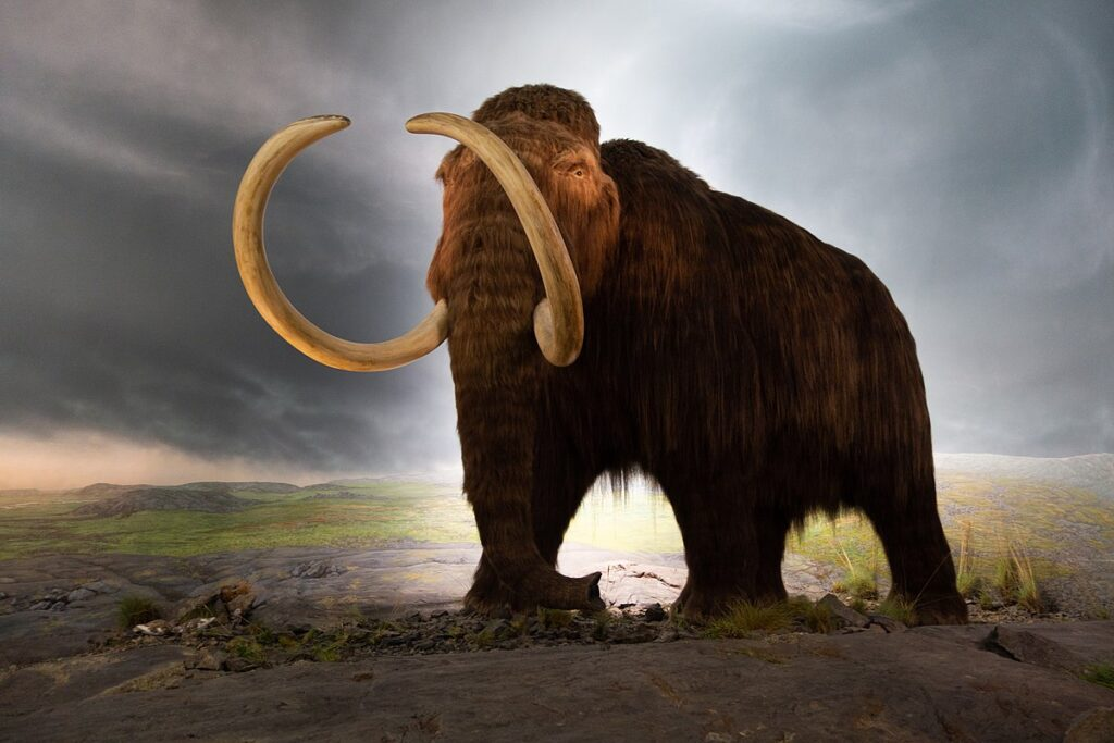 Million-year-old DNA sheds light on the genomic history of mammoths