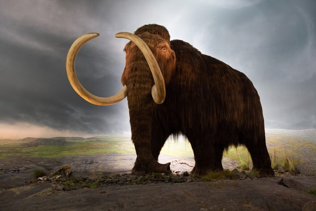 Human Hunting Was A Reason Behind The Extinction Of Woolly Mammoth As Well