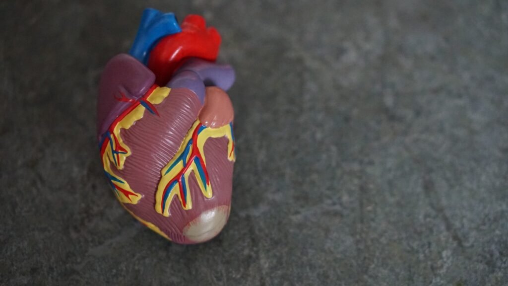 Hydrogel Can Prevent Damage of Heart Muscles After A Heart Attack